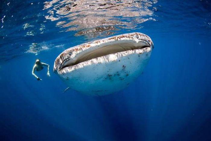 Ngỡ ngàng trước những hình ảnh ấn tượng về thế giới đại dương