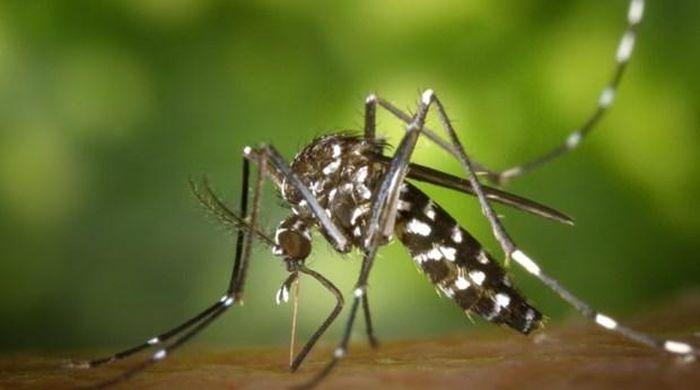 Các loài sinh vật xâm lấn gây thiệt hại hàng nghìn tỷ USD