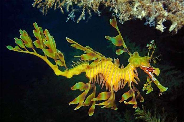 Ngắm nhìn những sinh vật 'độc nhất vô nhị' dưới đáy đại dương
