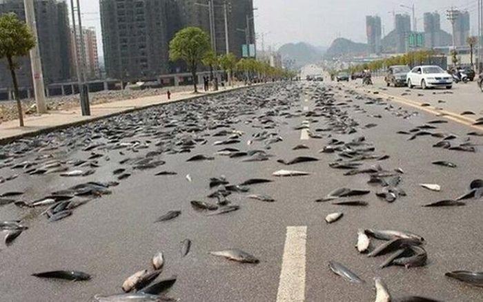 Hiện tượng mưa cá khiến nhiều người kinh ngạc và lời lý giải bất ngờ