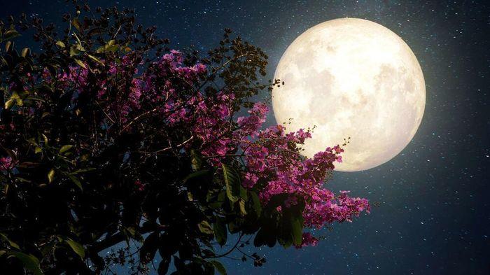 'Siêu trăng hồng' sẽ xuất hiện vào ngày mai