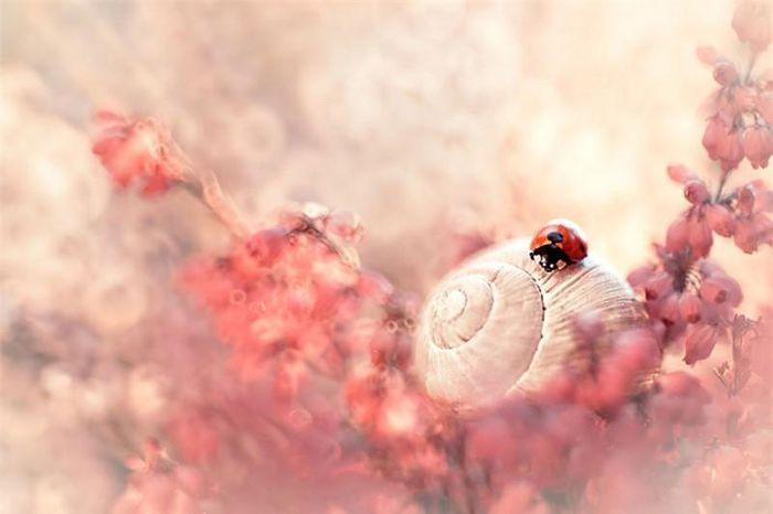 Khám phá thế giới côn trùng đẹp mê li như cổ tích qua lăng kính nhiếp ảnh diệu kỳ