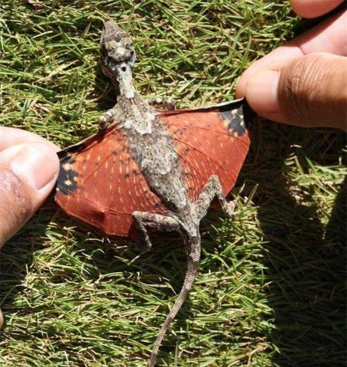 15 loài động vật kỳ lạ ngỡ như chỉ có trong phim giả tưởng