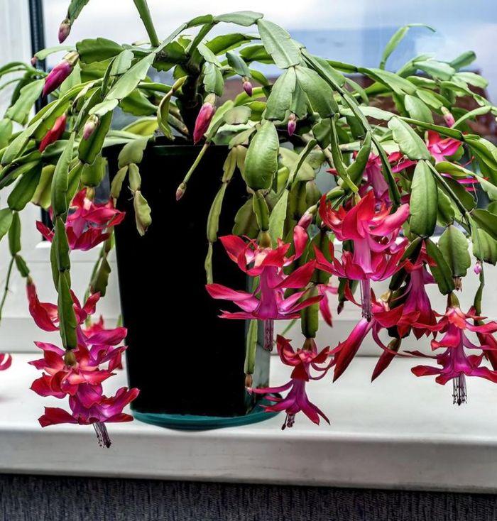 Những loại cây cảnh giúp ngôi nhà của bạn rực rỡ mà không cần chăm sóc nhiều