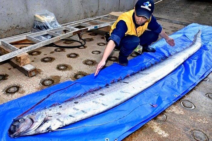 Bắt được con cá lạ dài 3 mét dạt vào bờ, ngư dân sợ hãi thả ngay xuống biển sau khi tra Google