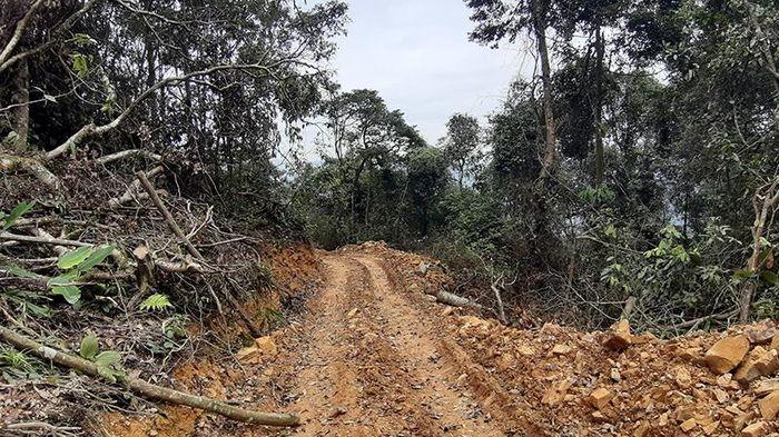Xử lý nghiêm tình trạng phá rừng tự nhiên ở Bắc Kạn