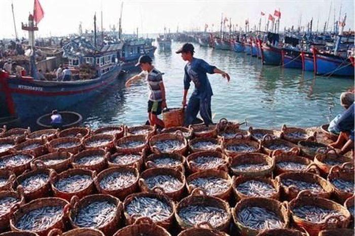 Tiền Giang được mùa khai thác biển, ngư dân phấn khởi