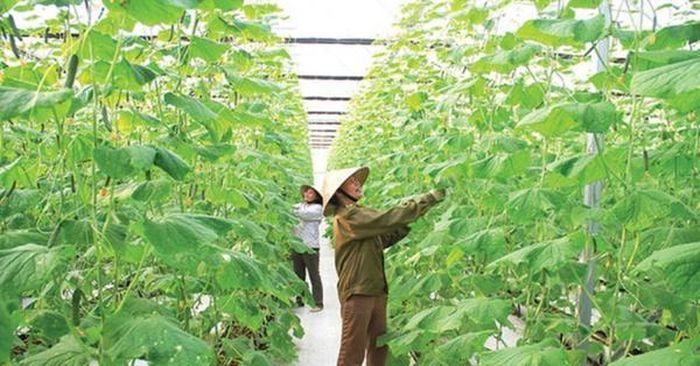 Thanh Hóa: Trao hơn 500 triệu đồng cho mô hình tổ hợp tác theo chuỗi giá trị về vệ sinh an toàn thực phẩm