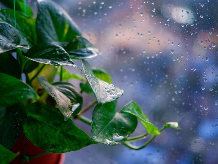 5 lý do tôi học trồng cây khi giãn cách
