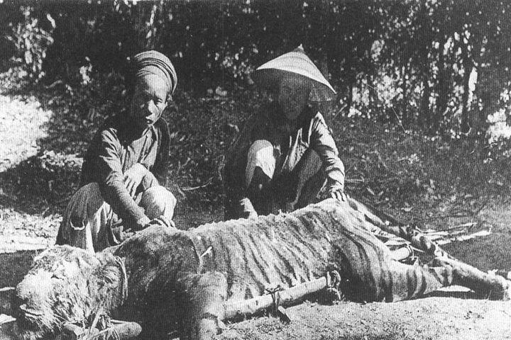 Một câu chuyện săn cọp đất Khánh Hòa - Zing - Tri thức trực tuyến